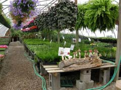 A greenhouse full of horticultural delights.